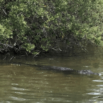 A boat tour of the Indian River Lagoon.