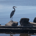 You'll see many different birds when visiting an estuary system.